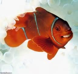 HappyFish